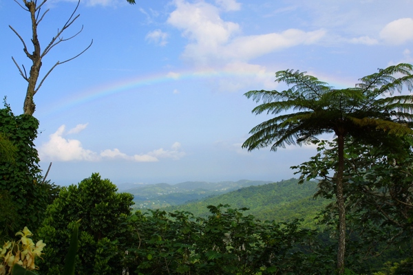 Rainforest valley with rainbow